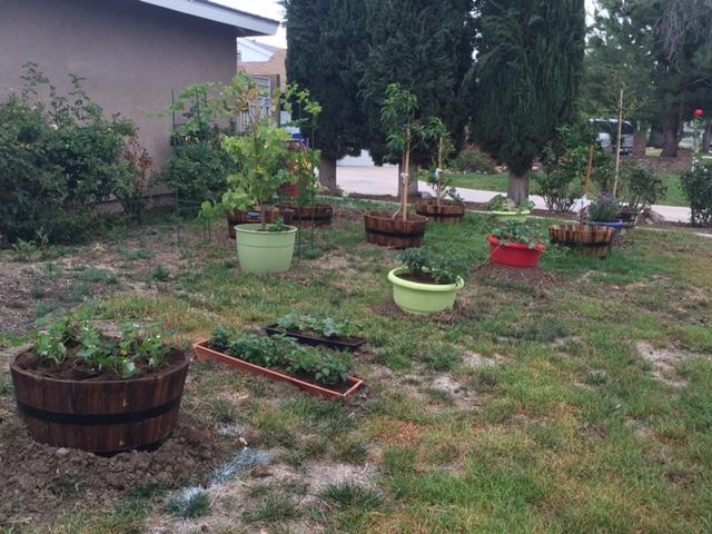 This is Noob Garden…