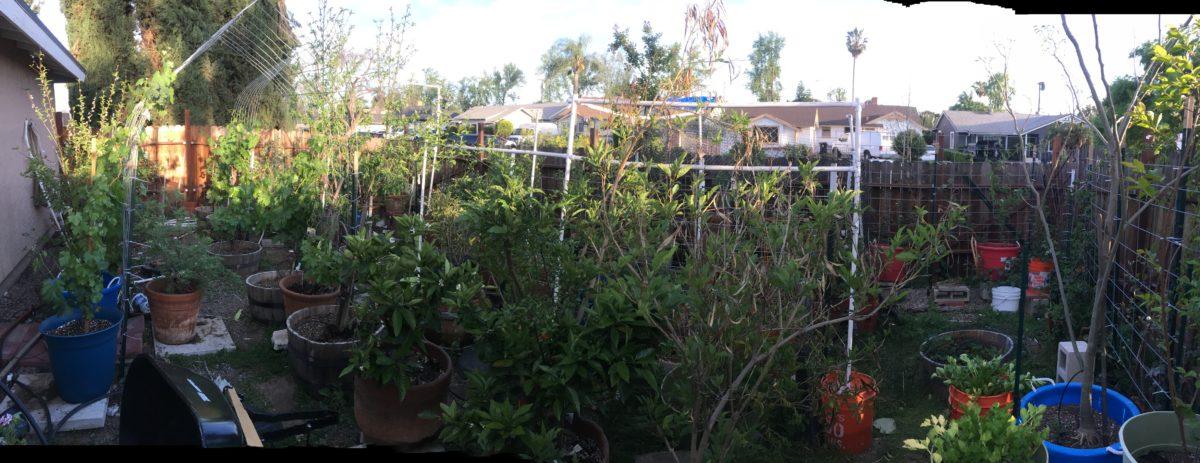 The Busy Mama Garden