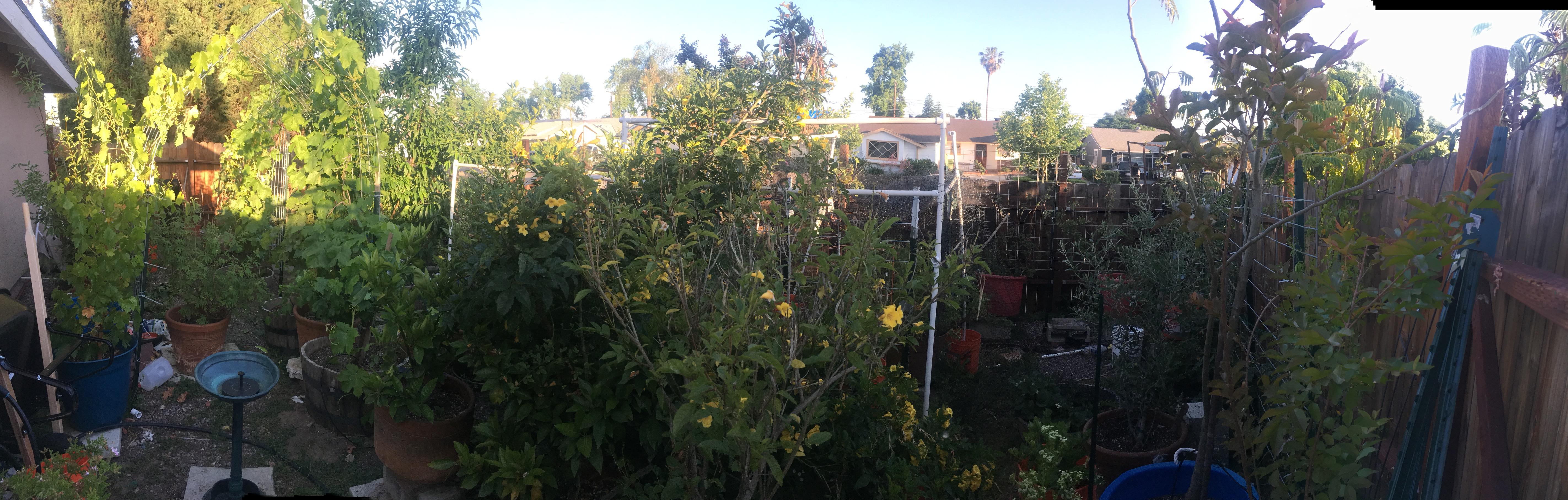 the busymama garden